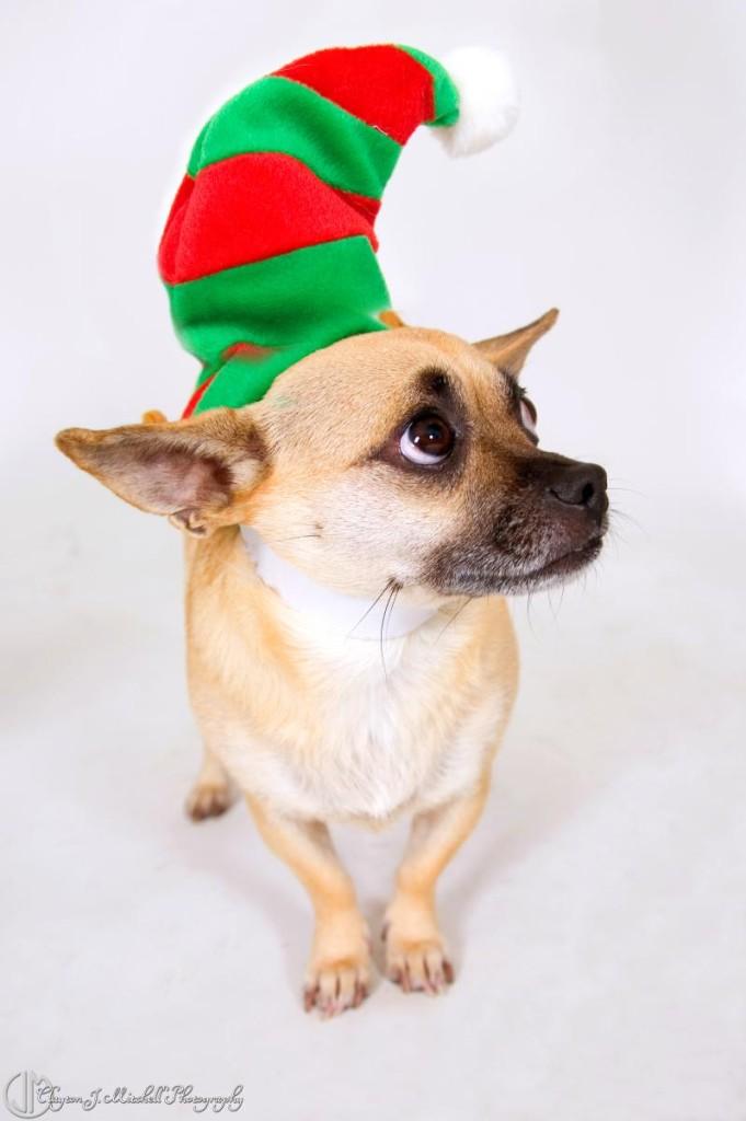 dog dressed like an elf