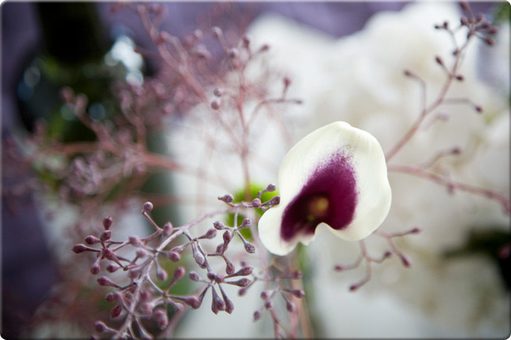 Closeup of a purple and white orchid